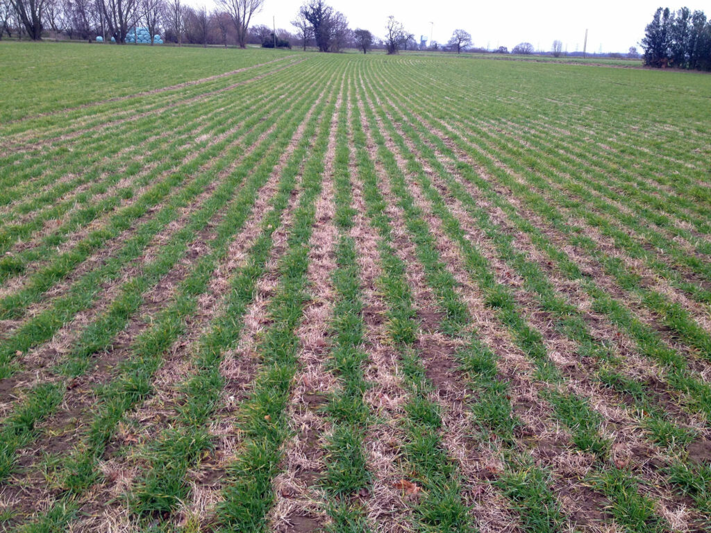 Crops - grass