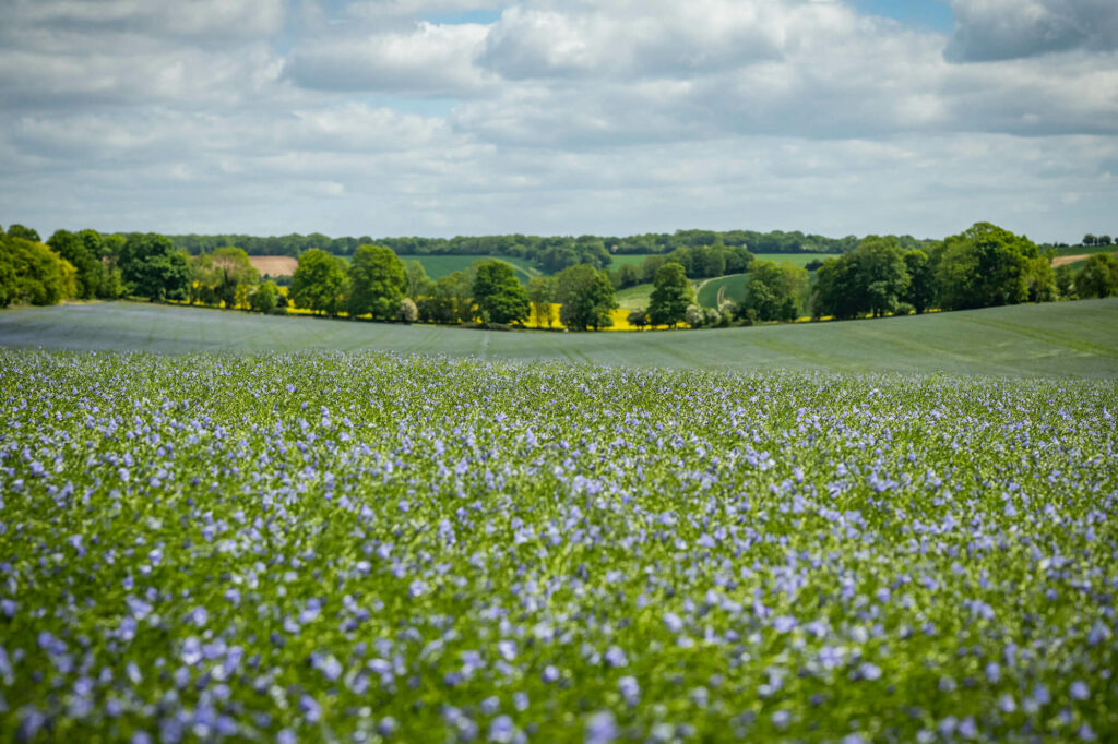 Crops - linseed