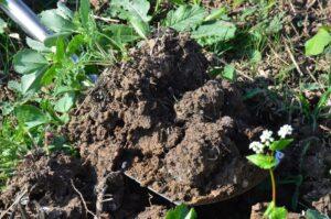 crop roots